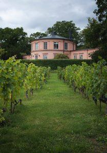 Pink building in vinyard