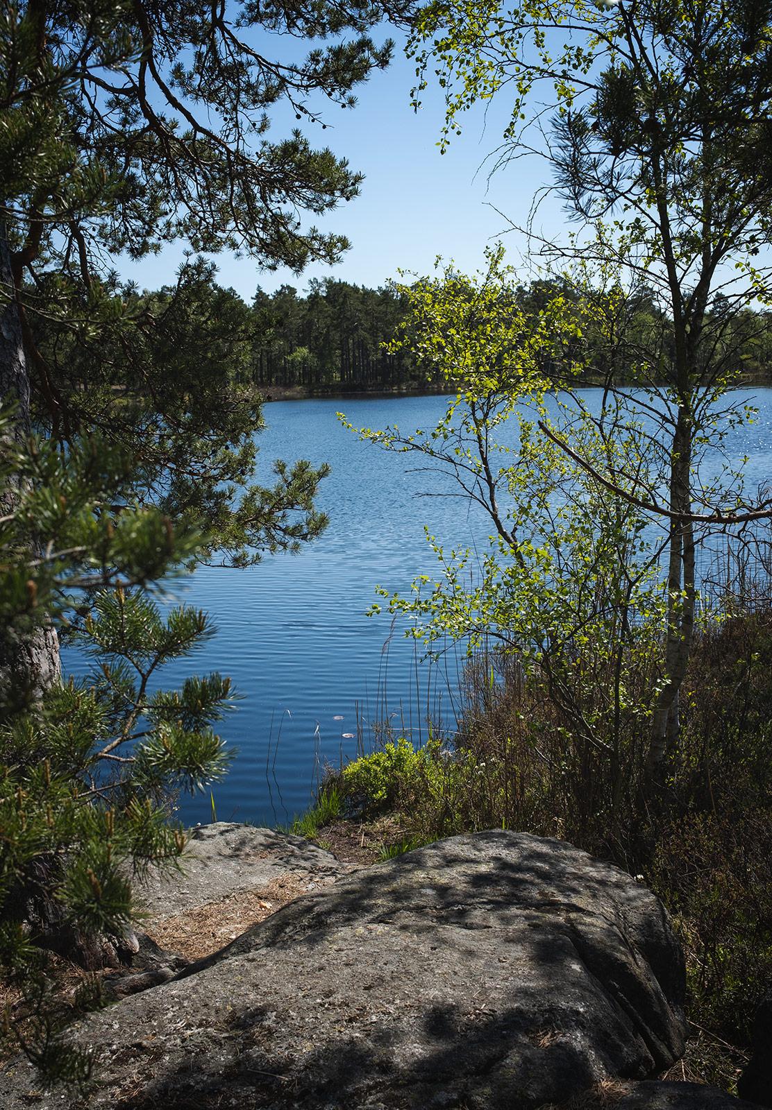 Trees around a lake