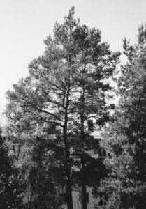 Building behind tree