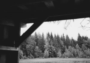 View of trees from cabin