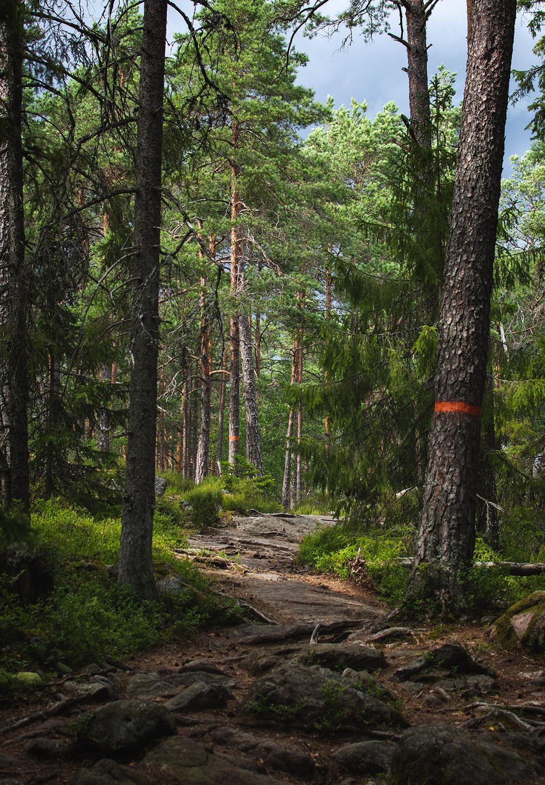 Shady forest trail