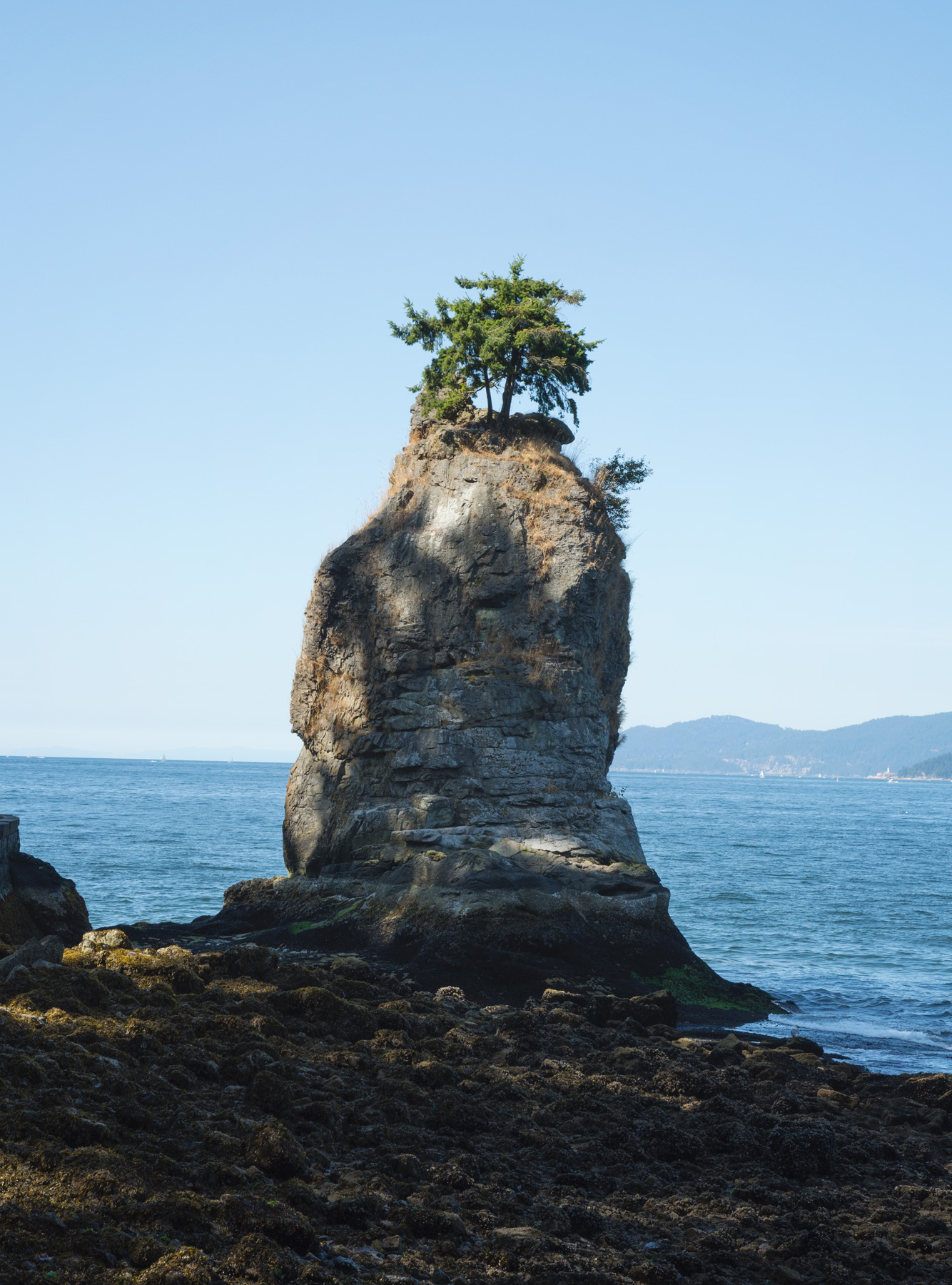 Tall rock with tree growing on top