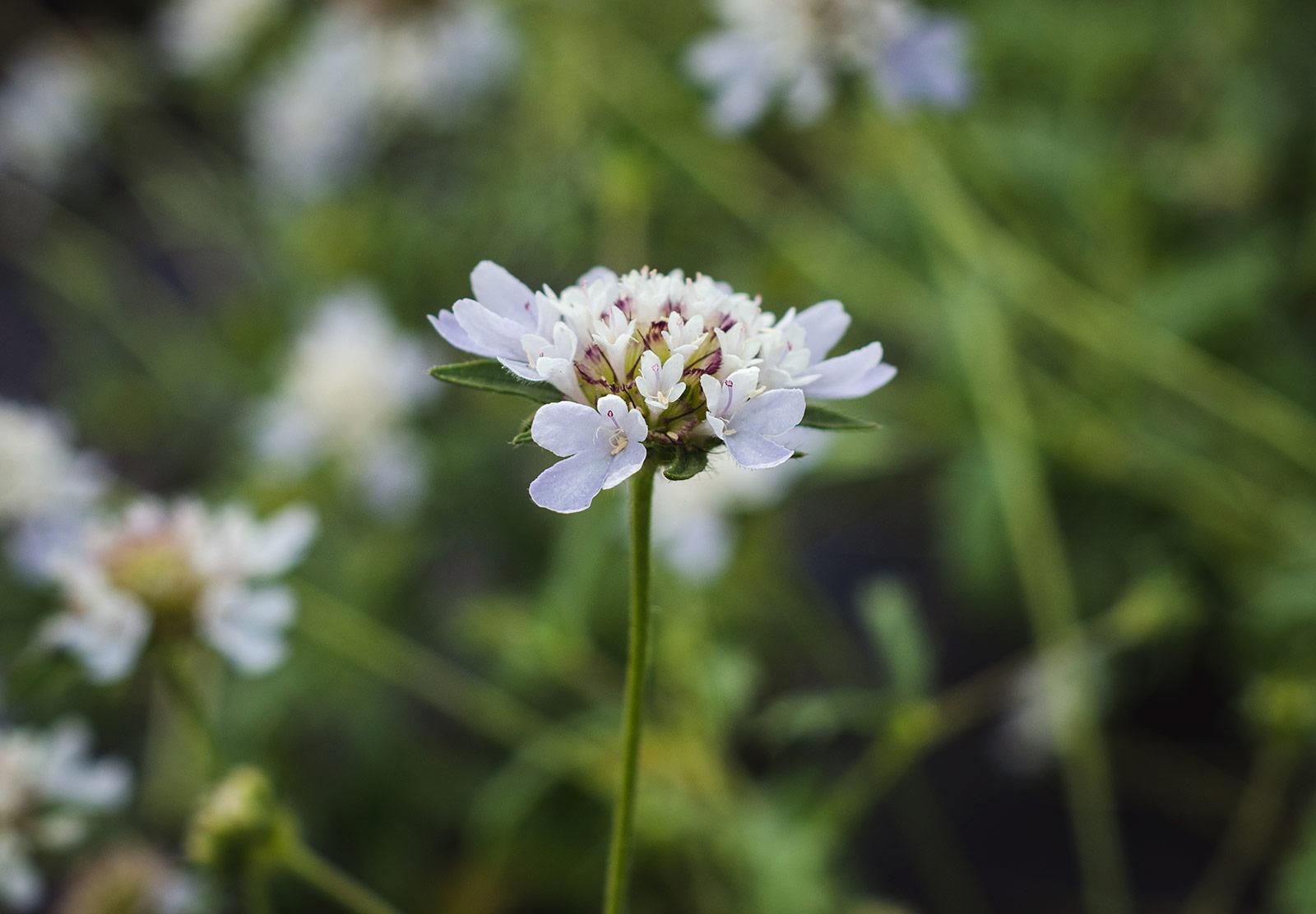 Pale blue petals
