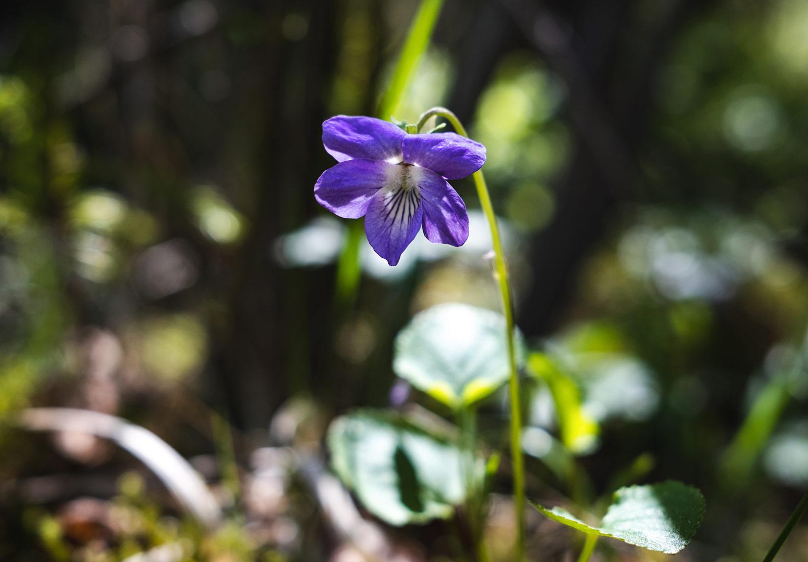 Purple flower in the sun