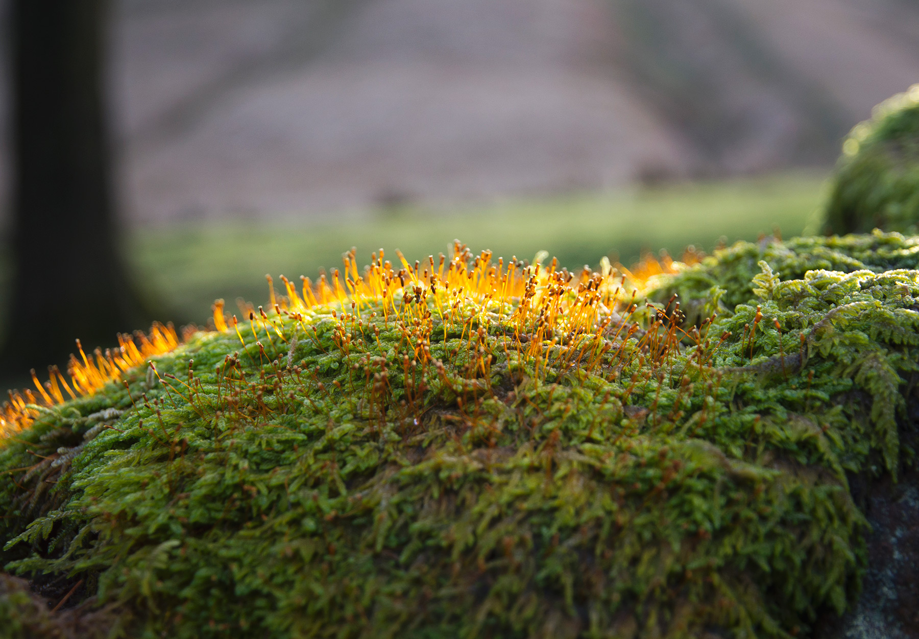 Bright yellow moss