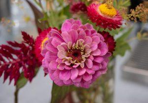 Closeup of pink flower